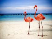 Q-L7.1  S227 Diamond Painting Set Flamingos 50x40cm