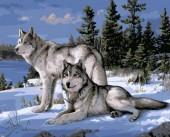 Z-D3.2 MS8559 Paint By Number Set Wolves 50x40cm