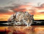 T-F7.2 S609 Diamond Painting Set Drinking Leopard 50x40cm
